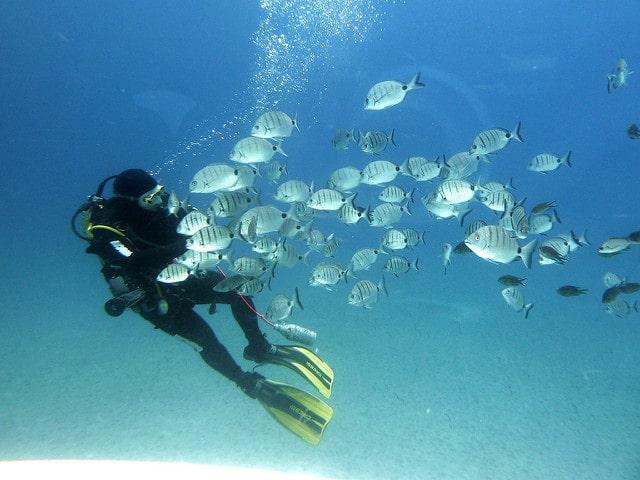 Tenerife Diving