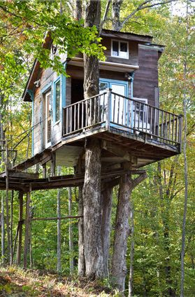 Fern Forest Tree House