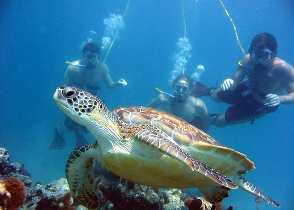 Snuba in Turks and Caicos