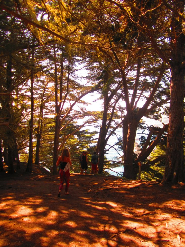 Redwoods at Big Sur