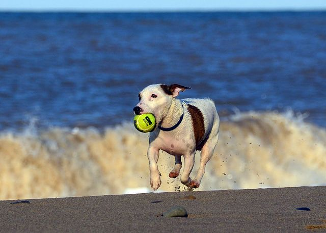 Dog Playing At Beach