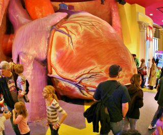 Heart Exhibition Franklin Institute