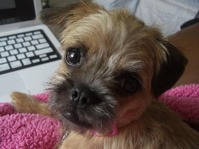 pup at computer