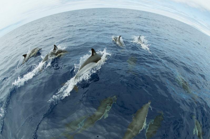 Sandanavia Whale Safari