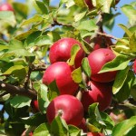 Harvesting The Fall Bounty At Apple Orchard Bed and Breakfast Inns