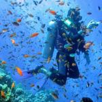 Diving Kealakekua Bay Hawaii