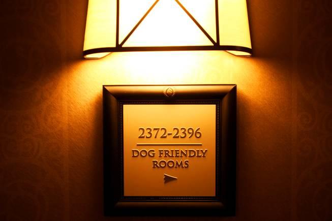 Las Vegas Pet Friendly Hotel