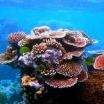 An Unforgettable Journey – Great Barrier Reef Trip Report
