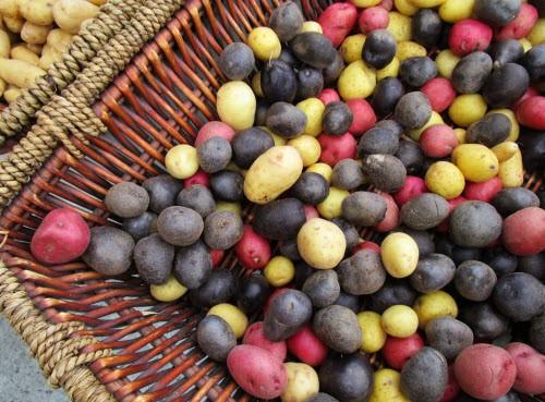 Peru Kartoffel