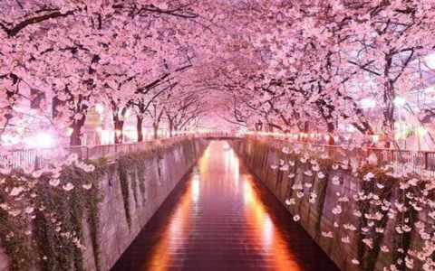 World's Most Breathtaking Cherry Blossom and Tulip Festivals