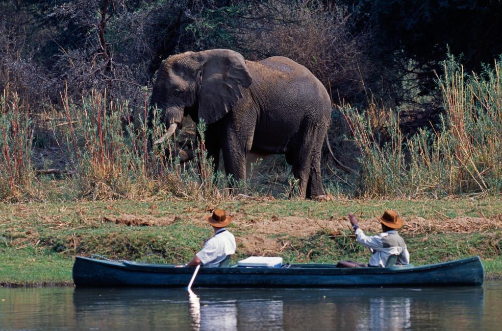 Kayak Safari Zambezi National Park