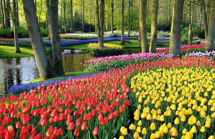 Keukenhof Gardens, Holland, Netherlands
