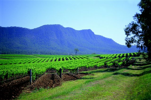 Hunter Valley Vineyards Australia