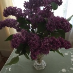 How To Keep Lilacs Bouquets From Wilting