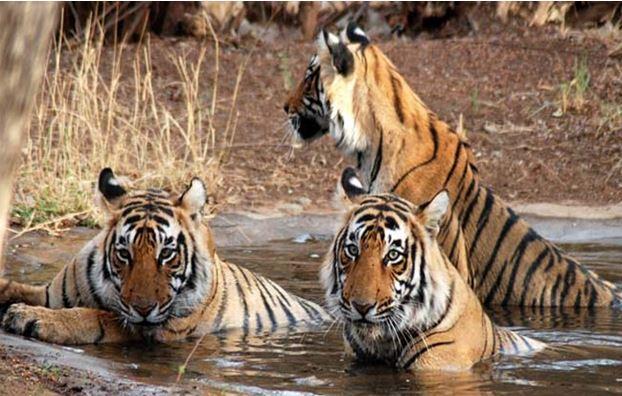 Jaipur Indai Wildlife