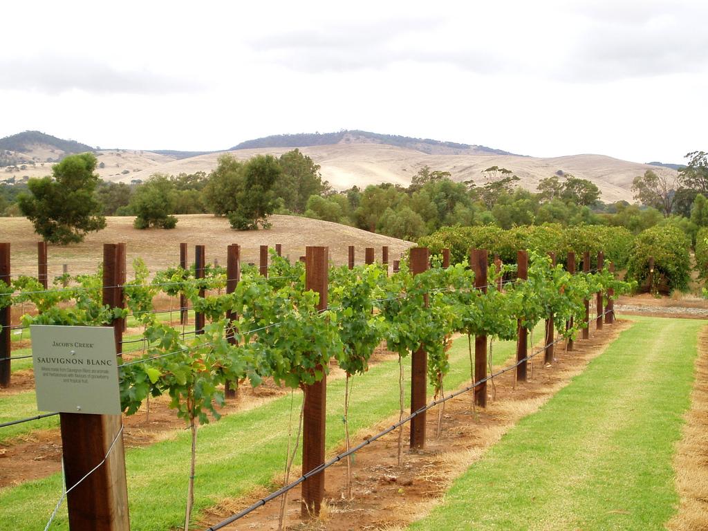 Adelaide Australia Vineyard