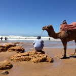 Camel on Beach, Morocco