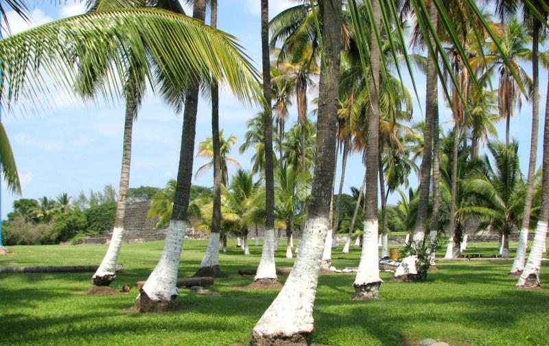 Zempoala Coconut Grove