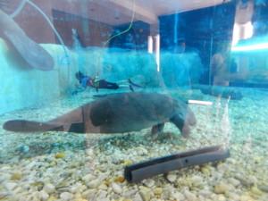South Florida Museum Aquarium