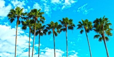 Florida palm-trees-1277243__480