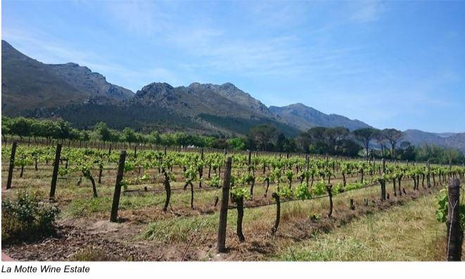 La Motte Vineyards South Africa