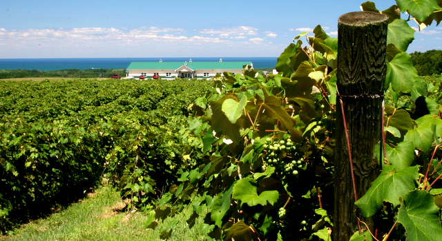 Lake Erie Wine Country