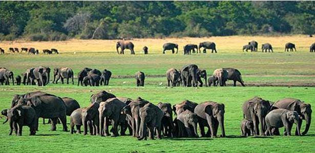 Wildlife in Sri Lanka