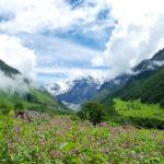 Valley of Flowers, Himalaya