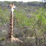 Giraffe House South Africa