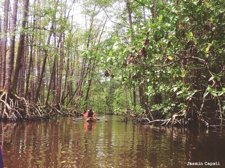 Palawan Islands Mangroves, Philippines