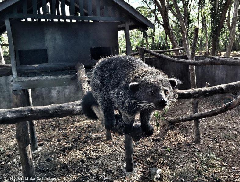 Palawan Island Animal Sanctuary, Philippines