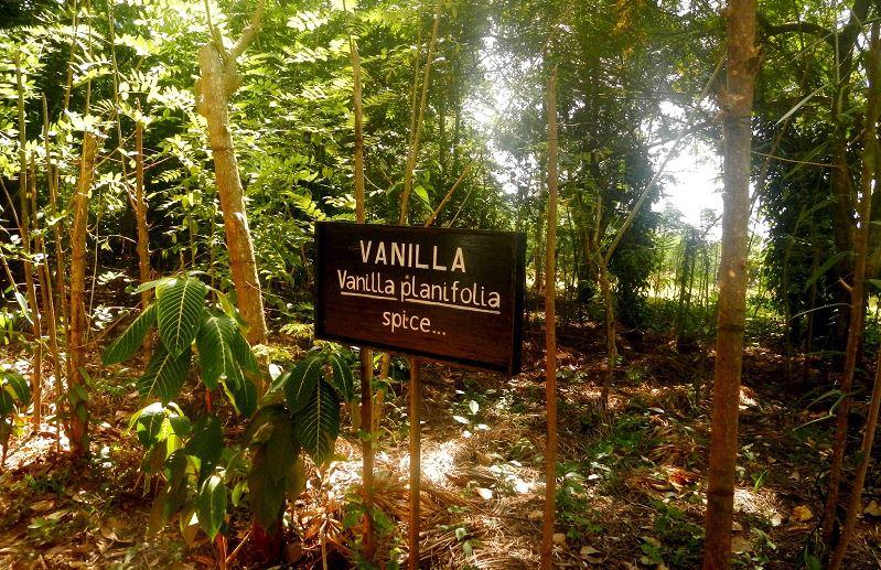 Zanzibar Vanilla Plantation