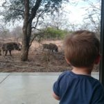 Taking Your Kids on Safari is Not a Crazy Idea