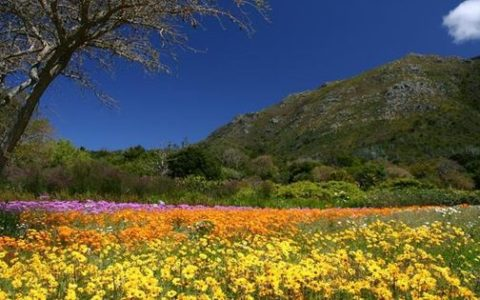 Cape Town's Spectacular Summer Wildflower Season