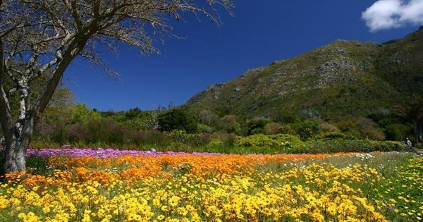 Kirstenbosch Botanical Gardens South Africa