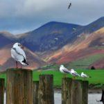 Derwentwater England