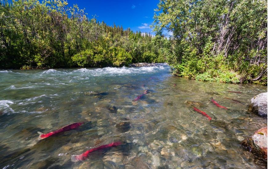 Pasagshak River Alaska