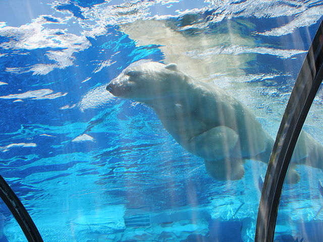 Detroit Zoo, Wikimedia