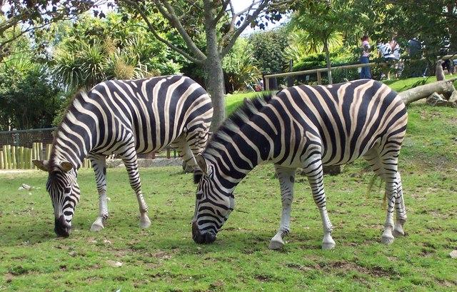 Newquay Zoo, Cornwall, England