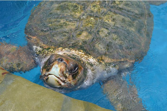 Turtle Project in Brazil