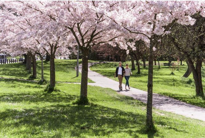 Christchurch Park, NZ
