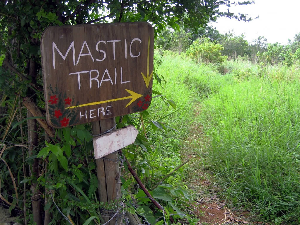 Cayman Islands Mastic Trail