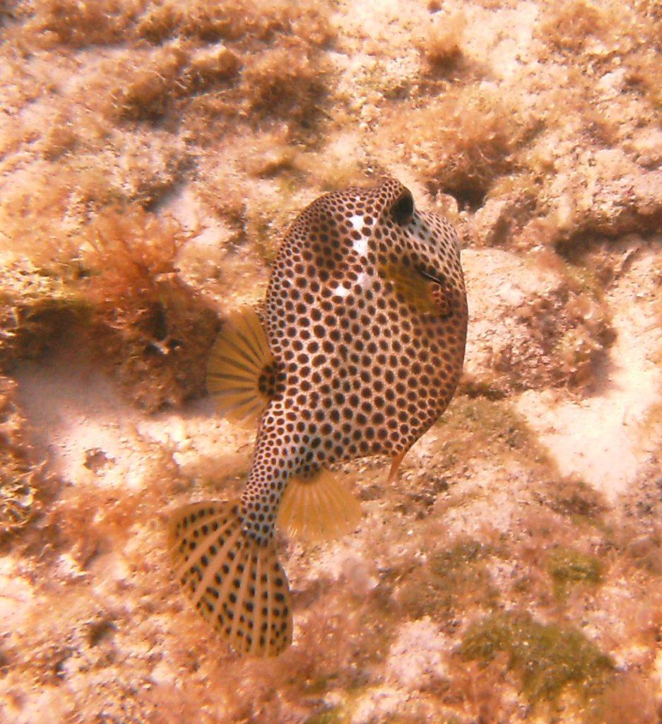 Cayman Island Eden Rock