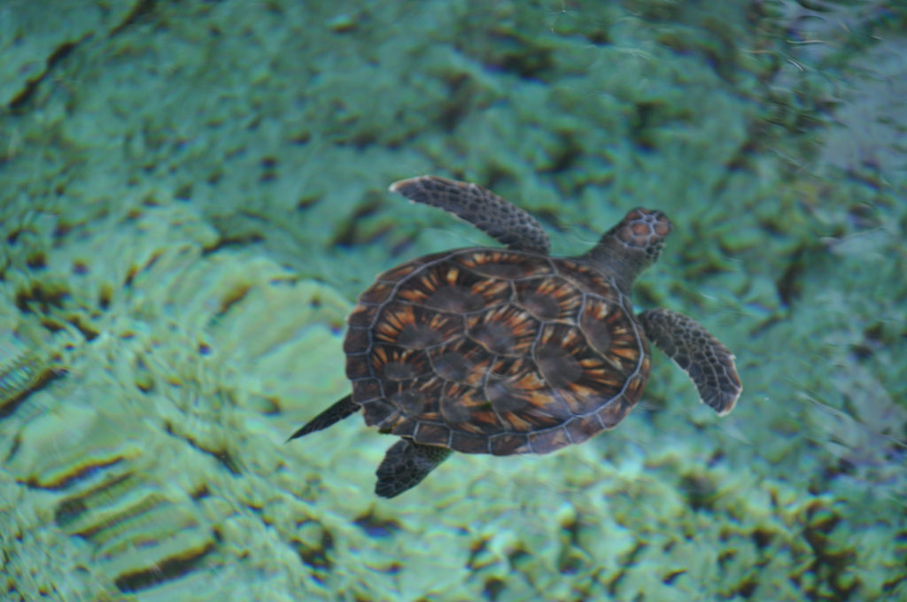 Turtle Center Cayman Island