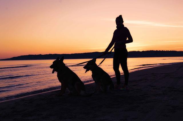Dogs walking on beach