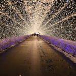 Japan Winter Lights