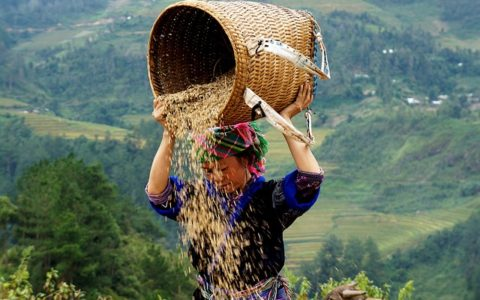 Crucial Things To Know Before Traveling to Vietnam