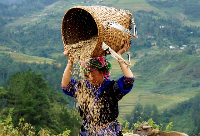 Vietnam Farm Worker