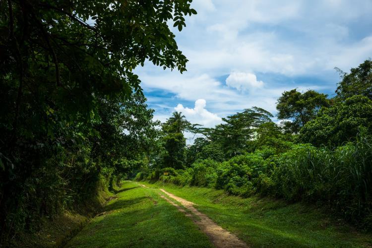 Bukit Timah Reserve Singapore