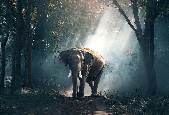 Elephan Park Thailand
